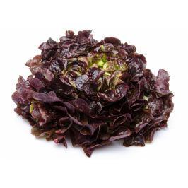 Salát dubový červený 1ks (cca 300g)
