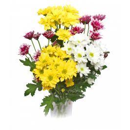 Chryzantémy mix barev vícekvěté vázané 5ks - délka 45 cm
